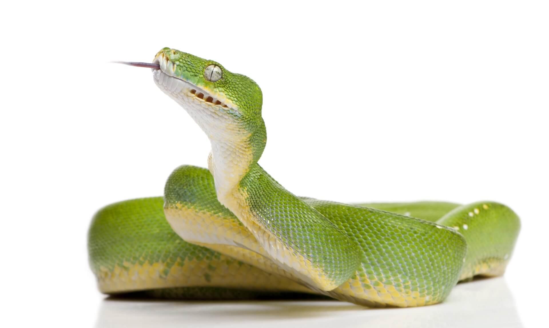 Groene slang